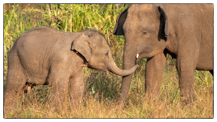 Elephant (2 of 6)